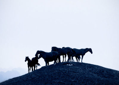 horses on the hill